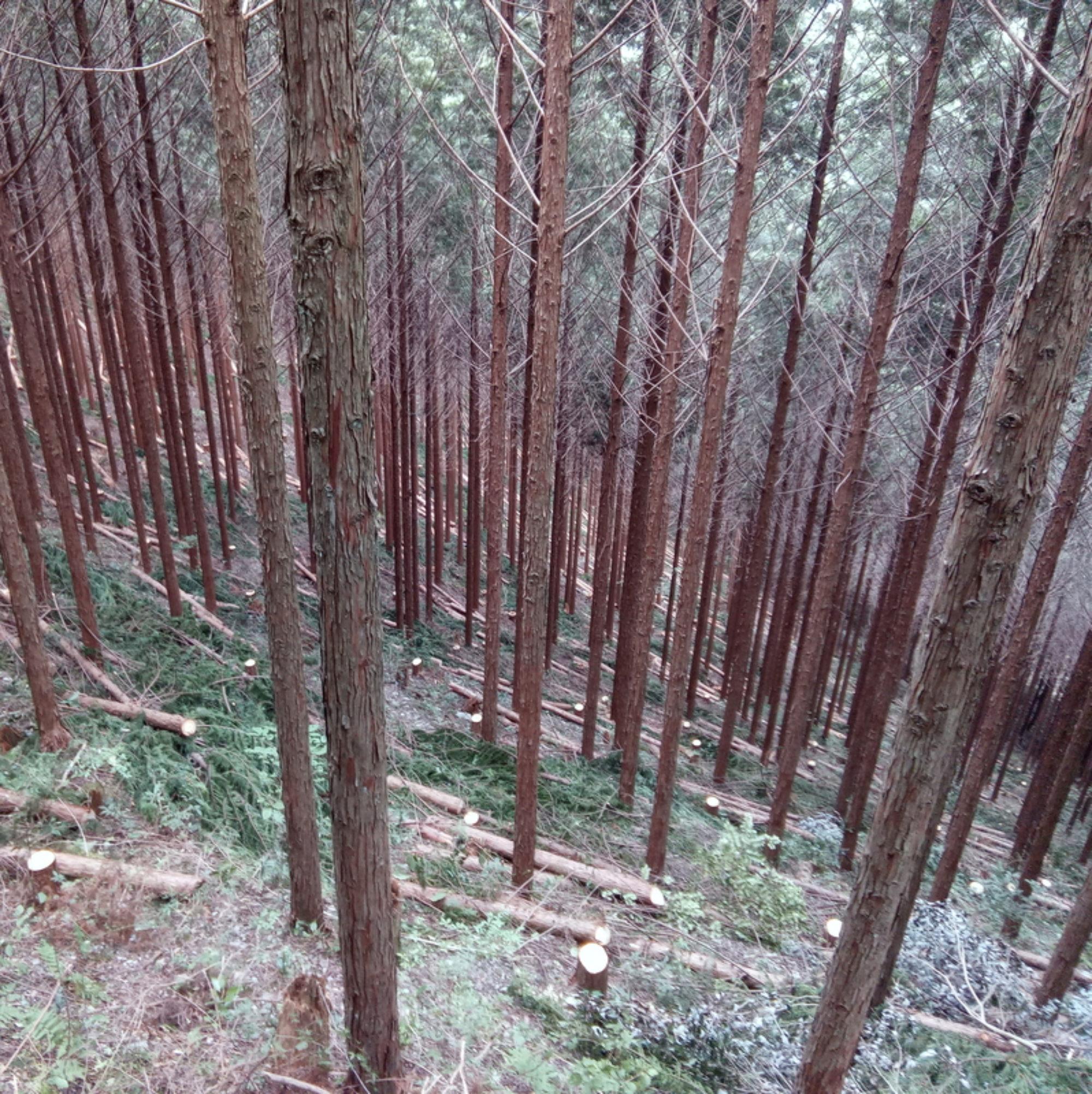 中予山岳流域林業活性化センター
